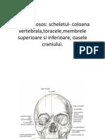 sistemul osos C1 (1)