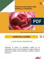 Clase 2 Desarrollo prenatal.pptx