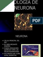 FISIOLOGIA DE LA NEURONA 3