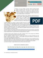 Risultati-preliminari-delle-analisi-sui-Funghi