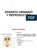 aparato urinario.pdf