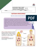 taller-2-sistema-endocrino-1.docx