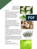 1Plantas medicinales