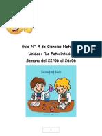 Guía N°4  ciencias Naturales 6° básico.docx