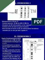 EL CROMOSOMA X