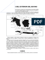 REGIONES DEL EXTERIOR DEL BOVINO.doc