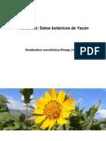 Yacon Factsheet