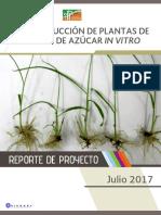 PRODUCCIÓN DE PLANTAS DE