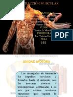 contraccion muscular exposicion