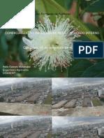 comercializacao.pdf