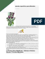 Antioxidantes Naturales específicos para diferentes órganos