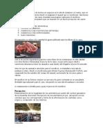 La obtención de la carne de bovino no empieza en la sala de matanza o el rastro.docx