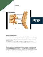 Columna Vertebral, discos y ligamentos