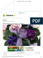 Violeta africana, descripción y cuidados - Hogarmania