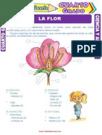 La-Flor-para-Cuarto-Grado-de-Primaria.pdf