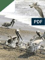 Introducción a la Observación y a la Identificación de las A.pdf