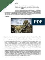 IMPORTANCIA DE LOS FRAILEJONES EN EL CICLO DEL AGUA.docx
