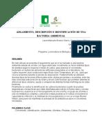 Aislamientodescripcioneidentificacionbacteriaambiental. (1)