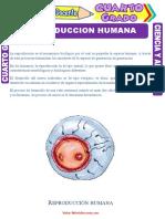 Reproducción-Humana-