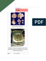 Cerebro sintesis