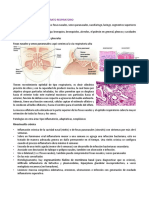 1. VIA RESPIRATORIA ALTA.pdf