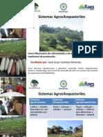 7. Sistemas agrosilvopastoriles