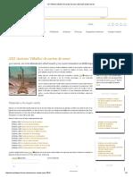 XIII 'Antonio Villalba' de cartas de amor _ Escuela de Escritores.pdf