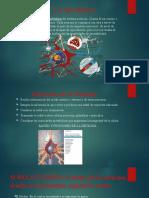 NEURONA (1).pptx