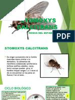 STOMOXYS CALCITRANS.pptx