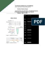 Informe 11 - PCR Reacción en cadena de la polimerasa