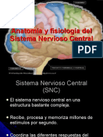 anatomiayfisiodelsnc-111109205258-phpapp02.pdf