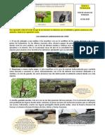 LOS ANIMALES AMENAZADOS DEL PERÚ.docx