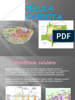 Proiect celula eucariota