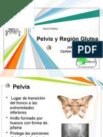 Pelvis y Región Glutea - 1era Parte