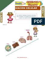 Organización-Celular-para-Quinto-Grado-de-Primaria.pdf