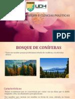 BOSQUES DE CONIFERAS Y BOSQUE ANDINO