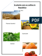 Lista de plante care se cultiva in Republica.docx