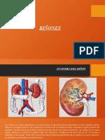 anatomia fisiopatologia y funciones del riñon-mayra.pptx