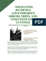 Propagating Deciduous