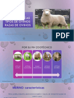 CARACTERISTICAS POR FIN Y RAZAS DEL OVINO.pdf