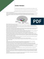 Auto Cura e o Cerebro Humano.pdf · versão 1