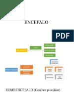 Embriología del Encefalo