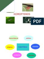 HOMOPTEROS POWER POINT.pptx