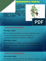 Unidad 5 raiz.pdf