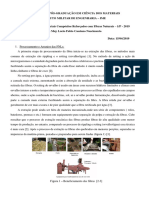 Modelo de relatório_FNLs_vs08
