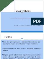 Pelos_y_Fibras.pptx