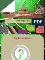 orgaos vegetais