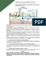 ciclo del carbono y fósforo