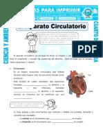 Ficha-El-Aparato-Circulatorio-para-Cuarto-de-Primaria.doc