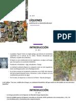 13va clase. Liquenes.pdf